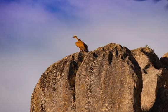 @icasillasphoto en Hamelin: Fauna  (San Lorenzo de El Escorial), El guardián. #Otoño20