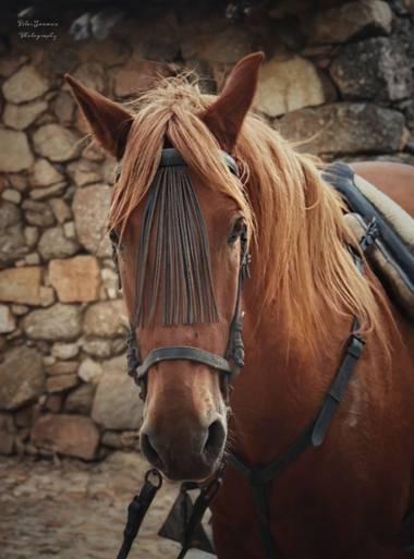 Yatoma66 en Hamelin: Fauna  (Bonilla de la Sierra), Tan bonito!!!