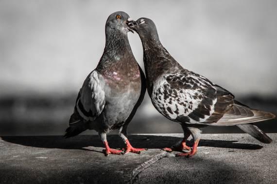 Fotografocendros en Hamelin: Fauna  (Palma), El amor de la fauna 😍 #fauna #animales #palomas #likes #followme #sigueme #hamelin #fotos #creacion #instanta...
