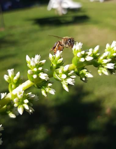 YAMILA  en Hamelin: Fauna  (Maracó), Feliz día a todos los que trabajan