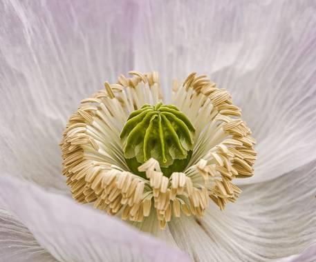 jd-jp en Hamelin: Flora  (Rivas-Vaciamadrid), #flora21