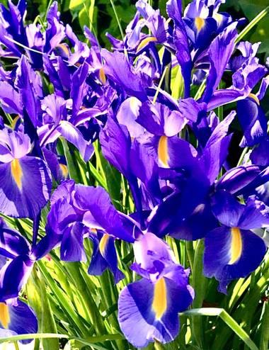 su en Hamelin: Flora  (Gelves), Flores de mi jardín