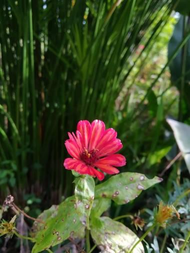 Zaynab en Hamelin: Flora, Preciosa
