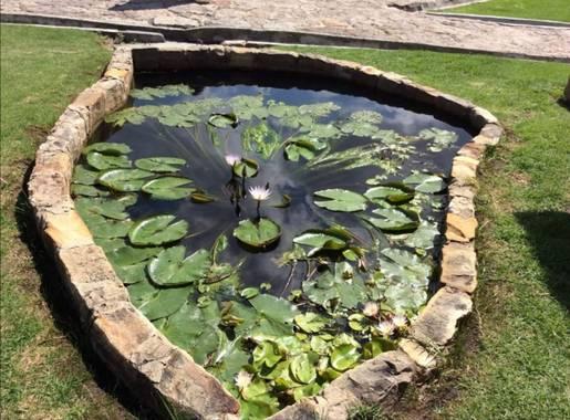 Alejillo01234 en Hamelin: Flora