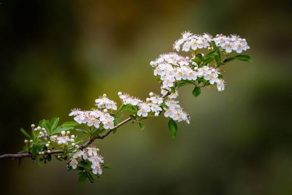Franciscojlopez63 en Hamelin: Flora  (Gerena), desconozco el nombre, fue tomada en el primer trimestre del año #flor #flores #flower #hamelin