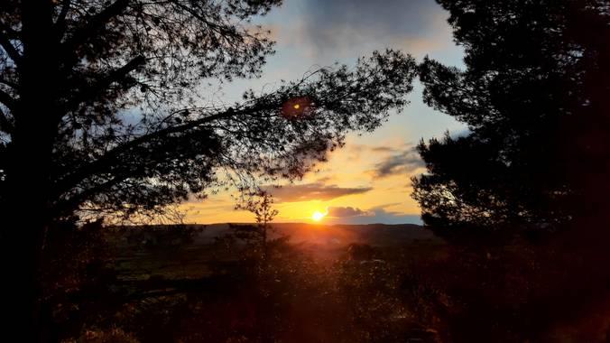 Arianapardos en Hamelin: Paisaje  (Velilla de Jiloca), Atardeceres bonitos #flora21 #sol #atardecer #arboles #flora #paisaje #landscape #naturaleza