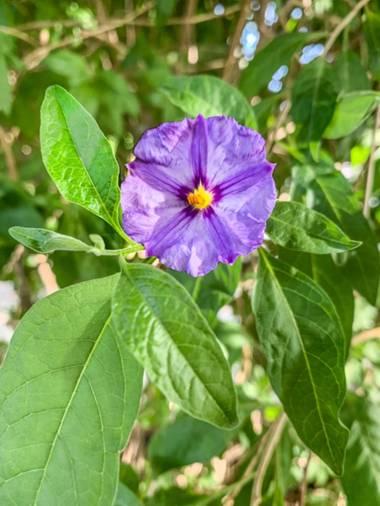 carogv1995 en Hamelin: Flora  (Archena), #flora  #lilalila