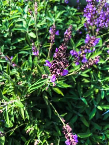 carogv1995 en Hamelin: Flora  (Mula), #flora21 #bellezadelanaturaleza