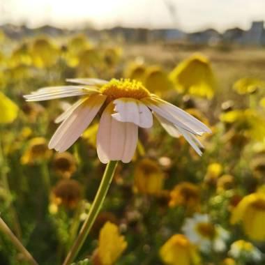 Ajreinapacheco en Hamelin: Flora  (Humilladero), #flora21