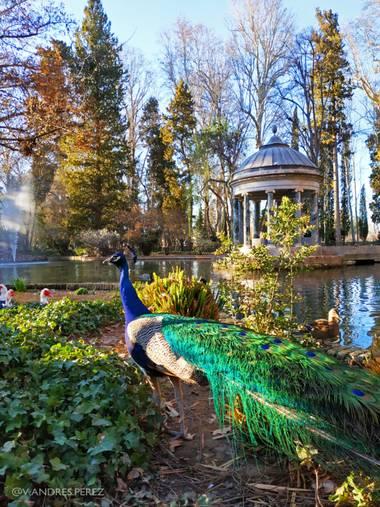 V. Andrés Pérez  en Hamelin: Paisaje  (Aranjuez), Estanque de los Chinescos. Jardín del Príncipe, Aranjuez (Madrid).  #ParquesyJardines #estanquedeloschine...