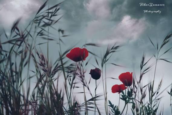 Yatoma66 en Hamelin: Flora  (Nuevo Baztán), Parece que va a llover #flora21