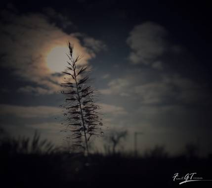 Frankgt48 en Hamelin: Flora  (Galapagar), #flora21