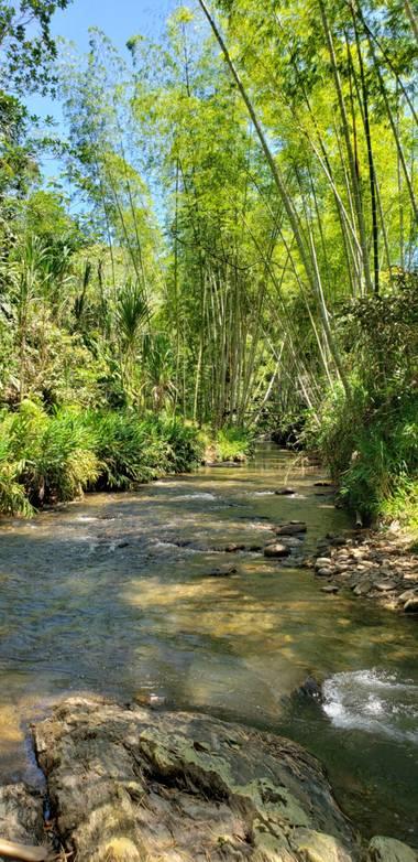 Cmgn.73 en Hamelin: Paisaje, Rio Medina...guaduales...