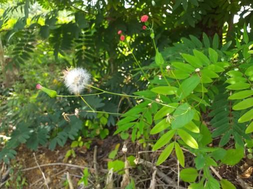 wendydearr en Hamelin: Flora