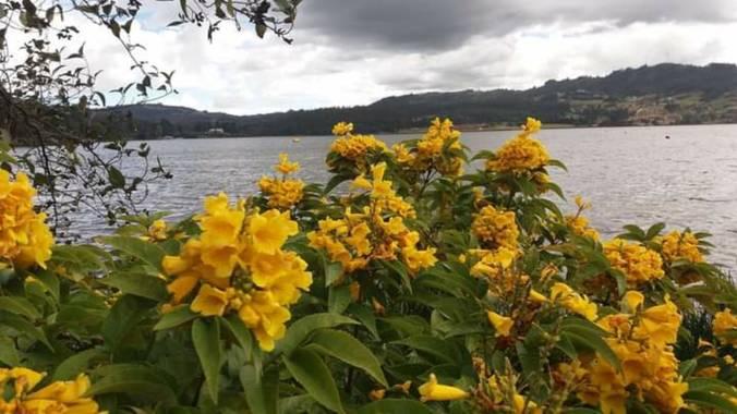 Doplapi en Hamelin: Paisaje, Lago Sochagota. Colombia