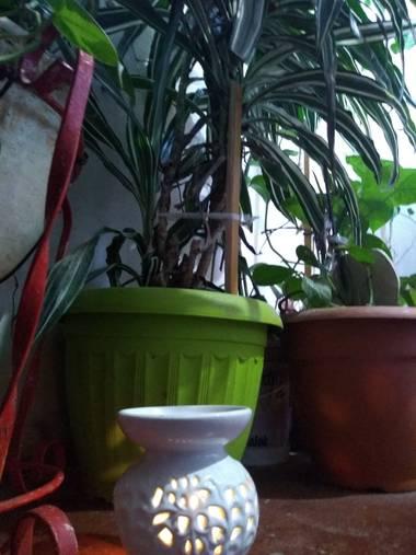 lacandelariaartesanias en Hamelin: Flora