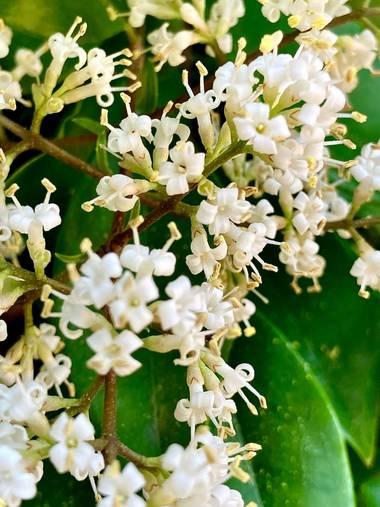 Erikalan9 en Hamelin: Flora