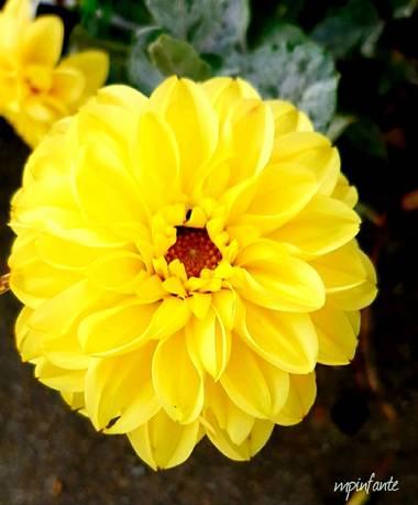 Mpinfante en Hamelin: Flora
