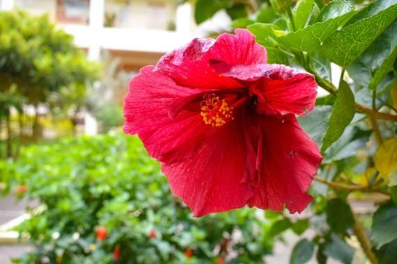 hugoturismo8 en Hamelin: Flora, San Joaquín fotografiado en el jardín de la casa de la cultura de #ElCarmendeViboral fotografía @hugo.tru