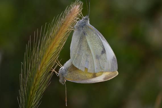 molaye02 en Hamelin: Fauna  (Las Palmas de Gran Canaria), 📸🦋🦋❤️