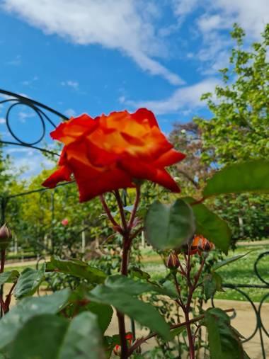 Liliannetnavas en Hamelin: Paisaje  (Zaragoza), #flora21 #rosasrojas #naturalezaespaña #naturaleza