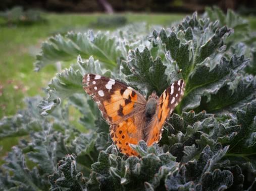 Reich  en Hamelin: Fauna  (Aldeire), Naturaleza.
