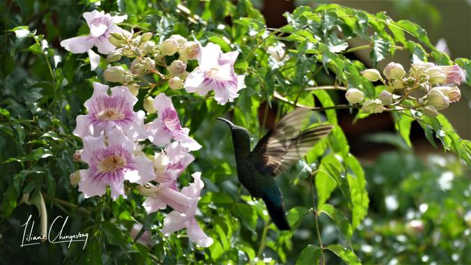Liliane.chinyavong en Hamelin: Fauna  (Saint-Joseph), #Aves21