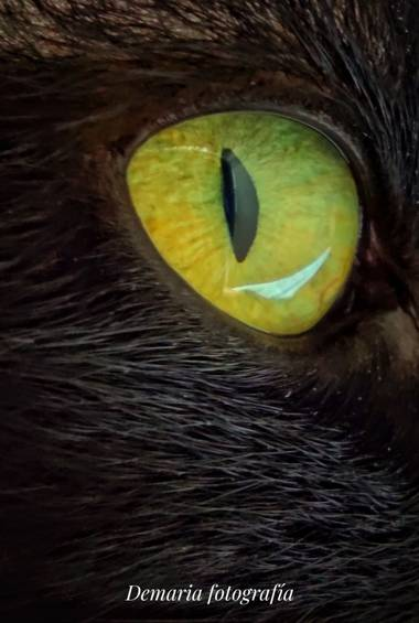 Marieldemaria.72 en Hamelin: Fauna, Ojo de gato