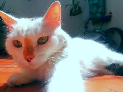Laura.95 en Hamelin: Fauna  (Girón), Lola #hamelin 🧡🐱💛