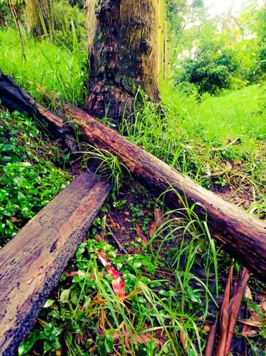 Rou Shot '96 en Hamelin: Flora  (Zipaquirá), #roushot1996 #🌳 #naturaleza #natural #green #verde #verdes #mundo #mundoverde #planeta #planetaverde #greenwo...