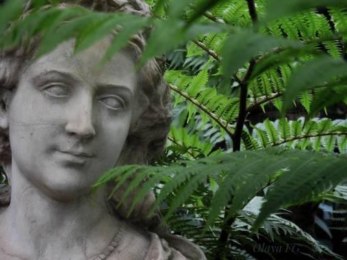 olaya96fg en Hamelin: Flora  (Elche), Mirada entre los helechos.