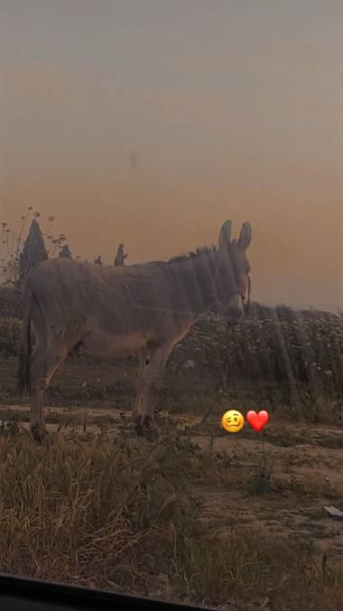 Isabeluchii 🤪 en Hamelin: Fauna, Un burro mirando 👀
