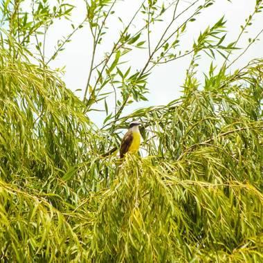 Manushrobles en Hamelin: Fauna, Observando desde arriba