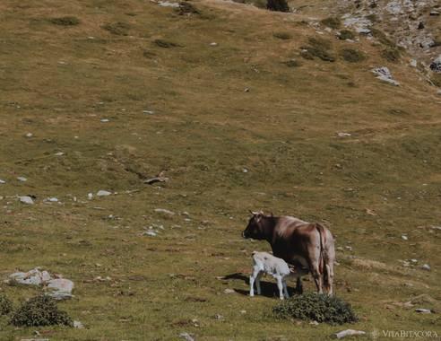 Yuga1983 en Hamelin: Fauna  (Queralbs), Vaig tenir la gran sort de veure'l néixer! A la Vall de Núria. #fauna #fauna2021 #fauna21 @vitabitacora @vitabitaco...