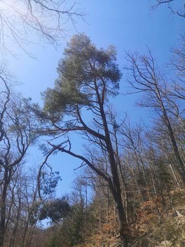 caluateq123 en Hamelin: Paisaje  (Sainte-Marie-aux-Mines), Vida en la naturaleza