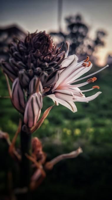 bonet21 en Hamelin: Flora  (San Fernando), #invierno20