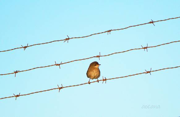 Lightscomeon en Hamelin: Fauna, #pajaro #cielo #animal #azul #dia #naturaleza