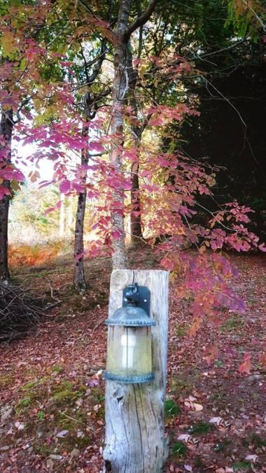 Mpinfante en Hamelin: Paisaje, Para iluminar la noche, este farolillo en el bosquecillo 🎑