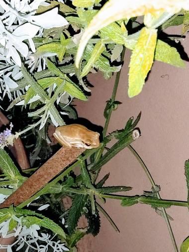 teresaoplolz en Hamelin: Fauna  (Villaguay)