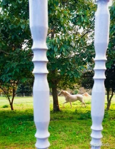 Mpinfante en Hamelin: Fauna, Hermoso caballo blanco