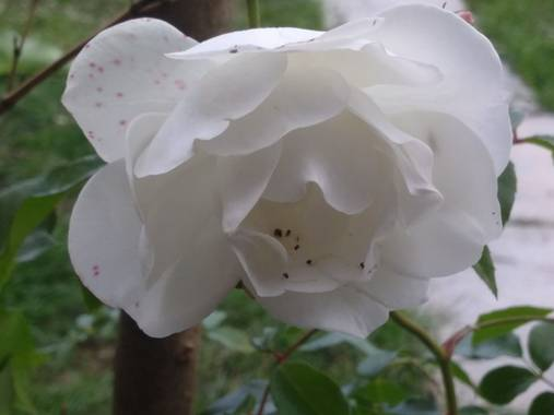 liianalfarth074 en Hamelin: Flora