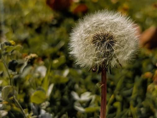 Toti Suárez en Hamelin: Flora  (Telde), Pide un deseo!! #canarias #grancanaria #flor #hamelin #hamelin2021 #hamelin21