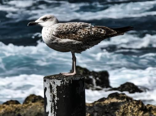 rqsalcedo en Hamelin: Fauna  (Las Palmas de Gran Canaria)