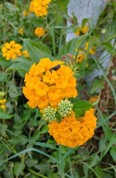 Solerantonio2 en Hamelin: Flora  (Almería), Flores en el parque