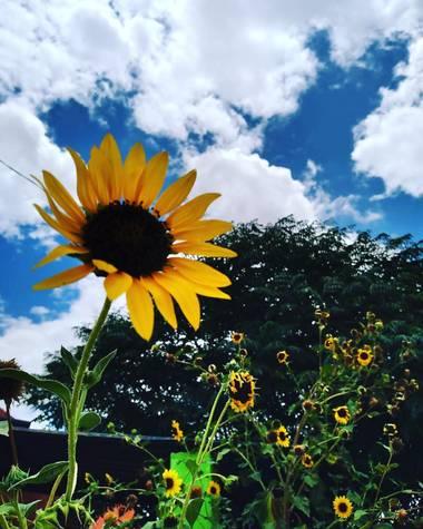 Navarroarevalomariateresa en Hamelin: Flora  (Viesca), Alegrando la mañana!!