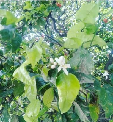 Supra3179 en Hamelin: Flora  (General San Martín), Una tarde caminando por el centro de buenos aires ...