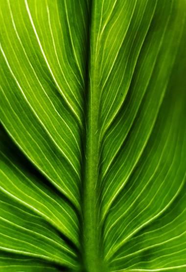 Mararuizasensio en Hamelin: Flora  (Ojén), #macro #flora21 #primavera #spring #planta #huaweiphotography #p30pro #huaweiphotographers