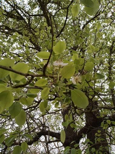 Alquimia Natural en Hamelin: Flora  (Camargo), Evolución 💕