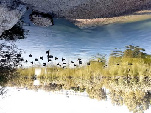 Diana Rosa en Hamelin: Fauna  (Jerez de la Frontera), Laguna torox,también estas con el cuidado de los gatitos abandonados
