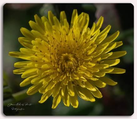 Manuropo39 en Hamelin: Flora  (Mesía), #Flora21